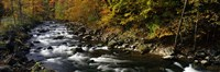 River Flowing through a Forest, Chittenango Creek, New York State Fine-Art Print