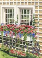Butchart Gardens Window Box Fine-Art Print