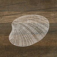 Rustic Shell - White Fine-Art Print