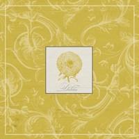 Golden Dahlias III Framed Print