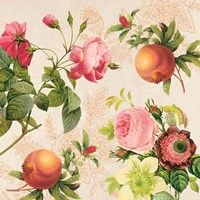 Pomegranates and Roses on Cream II Fine-Art Print