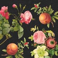 Pomegranates and Roses II Fine-Art Print