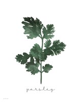 Parsley Fine-Art Print