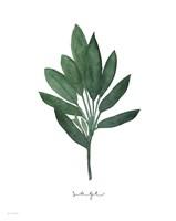 Sage Botanical Fine-Art Print