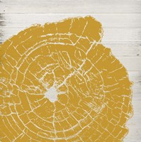 Tree Rings I Fine-Art Print