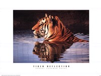Tiger Reflection Fine-Art Print