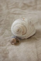 Shells I Fine-Art Print