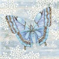 Blue Butterfly Fine-Art Print