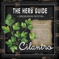 Herb Guide Cilantro Fine-Art Print