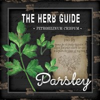 Herb Guide Parsley Fine-Art Print