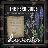 Herb Guide Lavender Fine-Art Print