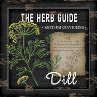 Herb Guide Dill Fine-Art Print
