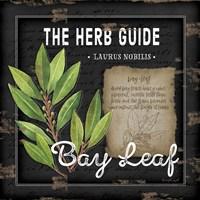 Herb Guide Bay Leaf Framed Print