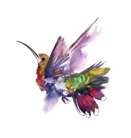 Colorful Hummingbird Fine-Art Print