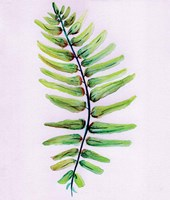 Blue Fern Fine-Art Print