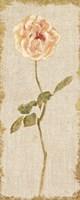 Pale Rose Panel on White Vintage v2 Fine-Art Print