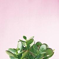 Succulent Simplicity III on Pink Fine-Art Print