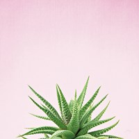 Succulent Simplicity I on Pink Fine-Art Print
