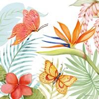 Treasures of the Tropics IV Fine-Art Print
