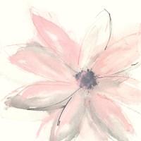 Blush Clematis I Fine-Art Print