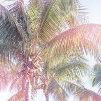 Dream Palm II Fine-Art Print