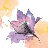 Watercolor Graphite Flower IX Framed Print