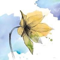 Watercolor Graphite Flower VIII Framed Print
