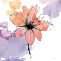 Watercolor Graphite Flower II Framed Print