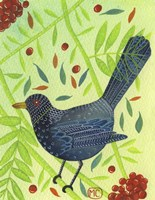 Blackbird 3 Fine-Art Print