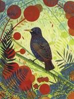 Starling Fine-Art Print