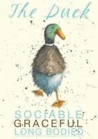 Duck Breed Fine-Art Print