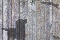 Lab And Squirrel Shadow Fine-Art Print
