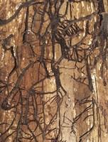 Firewood 2 Fine-Art Print