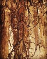 Firewood Fine-Art Print