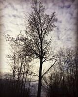 Tree In November Fine-Art Print