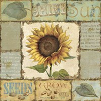 Sunny Day III Fine-Art Print