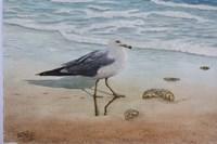 1 Seagull Fine-Art Print