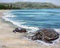 2 Turtles Fine-Art Print