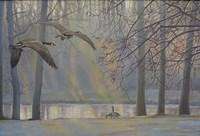 Geese An Pond Fine-Art Print