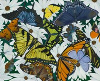 Butterfly Collage Fine-Art Print