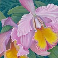 Orchid Series 4 Fine-Art Print