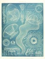 Jellyfish Sealife Fine-Art Print