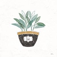 Fine Herbs VII Fine-Art Print