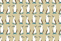 Blue Footed Booby Fine-Art Print