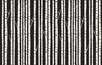 Birch Trees Fine-Art Print