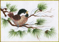Chickadee On A Pine Tree Fine-Art Print