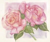 Roses 2 Fine-Art Print