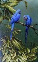 Pair of Blue Parrots Fine-Art Print