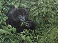Gorilla 1 Fine-Art Print