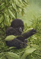 Prince Of The Virungas Fine-Art Print